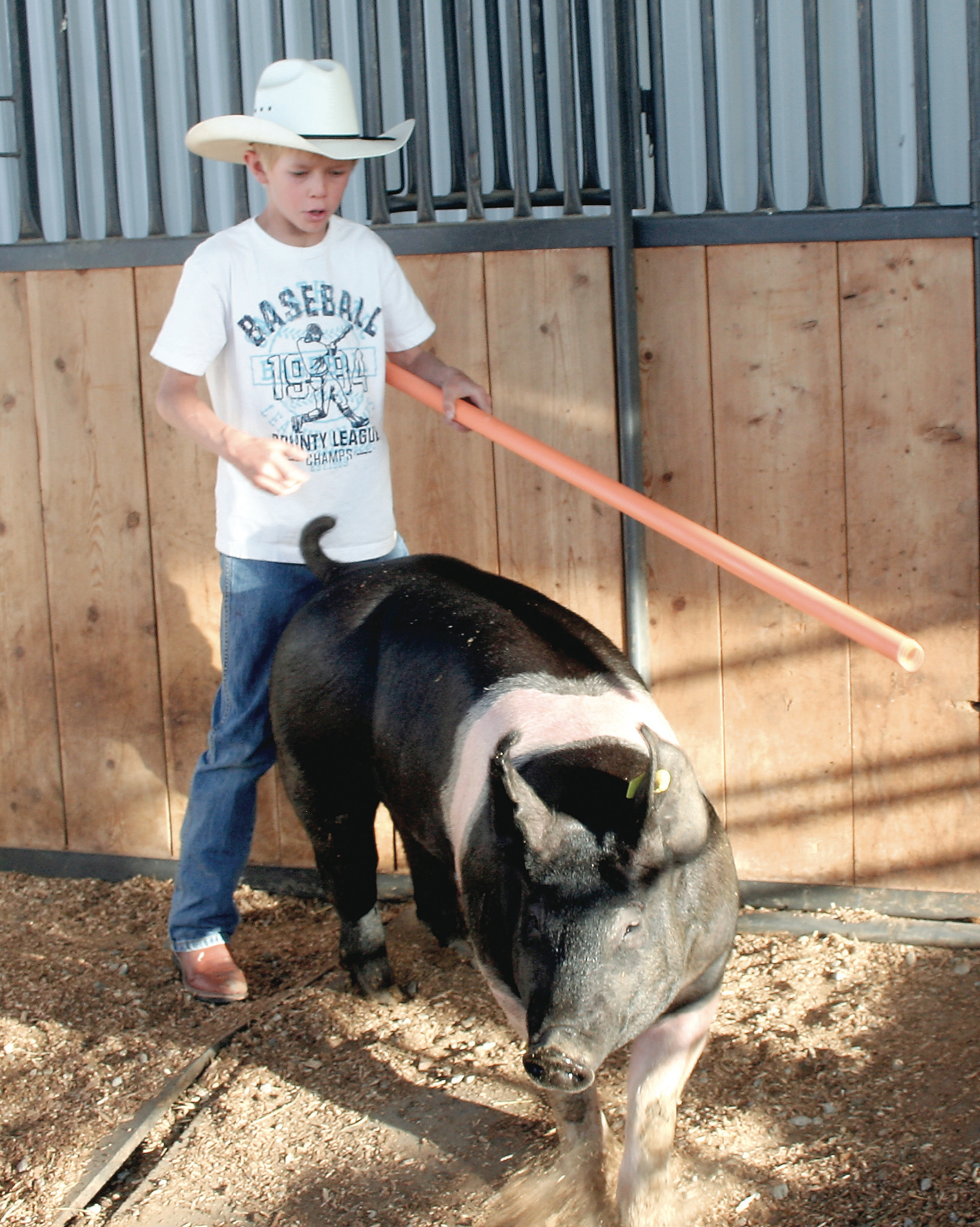 Brody Woods uses a pole to guide his pig, Happy, around his pen. He'll be using the same technique to show the pig before judges this week.